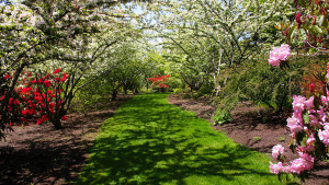 Darts_Hill_Garden_Park